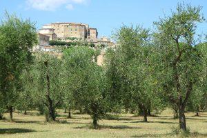 Lugnano ulivi